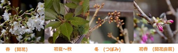 盆栽1年.jpg